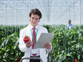 Researcher examining red pepper research